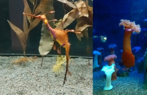 From the Aquarium - I had no idea sea creatures like this even existed! Living things truly are moving, breathing sculptures - complete works of art.